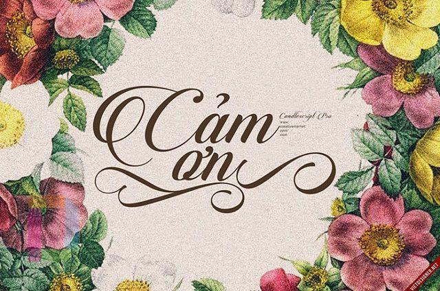 Font Candlescript Pro Việt hóa